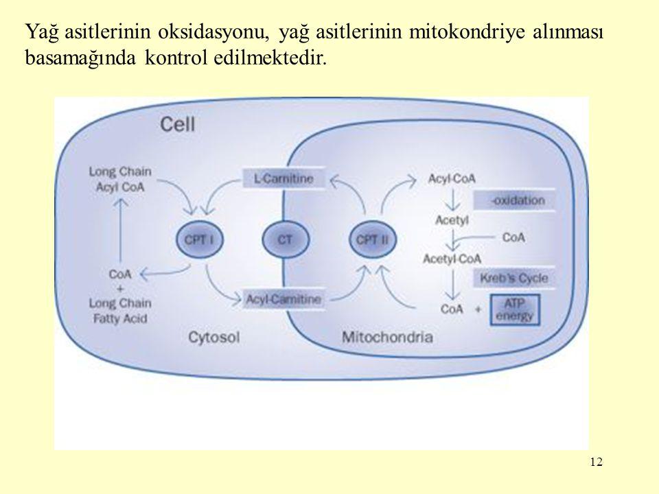 12 Yağ asitlerinin oksidasyonu, yağ asitlerinin mitokondriye alınması basamağında kontrol edilmektedir.