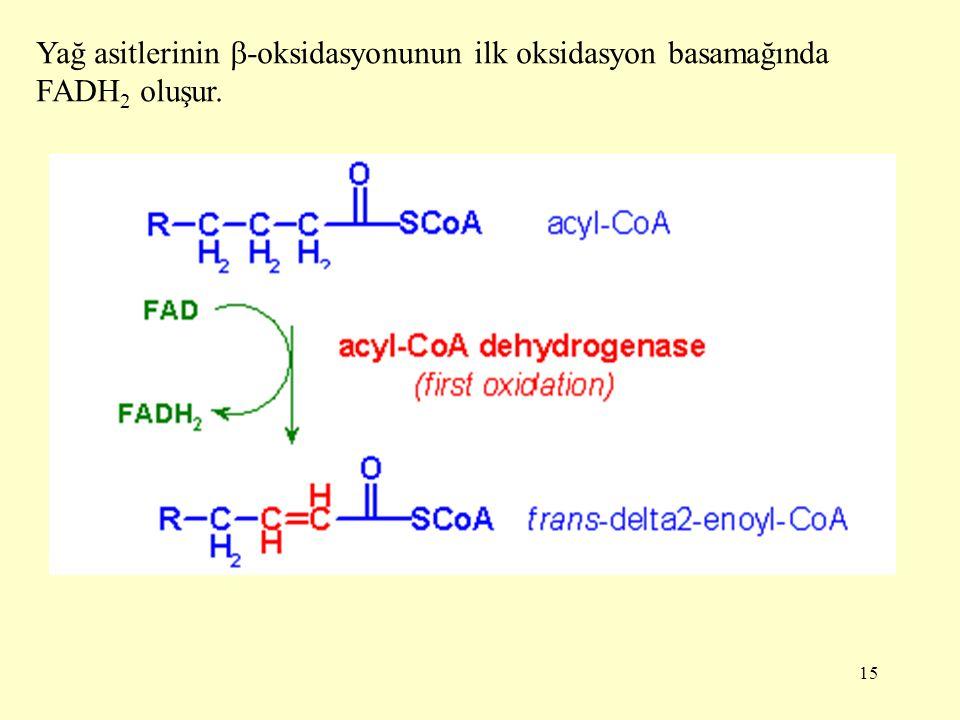 15 Yağ asitlerinin  -oksidasyonunun ilk oksidasyon basamağında FADH 2 oluşur.