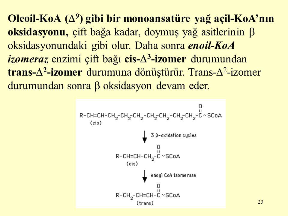 23 Oleoil-KoA (  9 ) gibi bir monoansatüre yağ açil-KoA'nın oksidasyonu, çift bağa kadar, doymuş yağ asitlerinin  oksidasyonundaki gibi olur. Daha s
