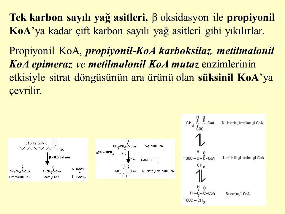 25 Tek karbon sayılı yağ asitleri,  oksidasyon ile propiyonil KoA'ya kadar çift karbon sayılı yağ asitleri gibi yıkılırlar. Propiyonil KoA, propiyoni