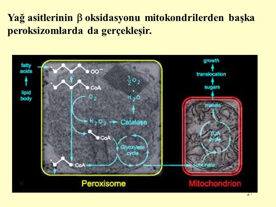 27 Yağ asitlerinin  oksidasyonu mitokondrilerden başka peroksizomlarda da gerçekleşir.