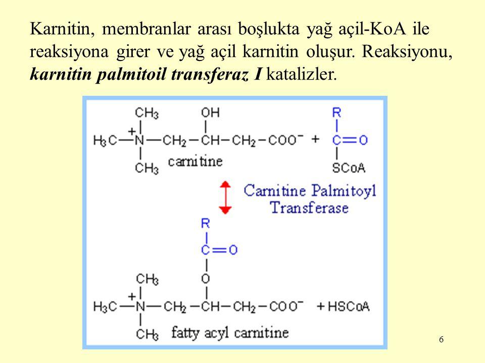 6 Karnitin, membranlar arası boşlukta yağ açil-KoA ile reaksiyona girer ve yağ açil karnitin oluşur. Reaksiyonu, karnitin palmitoil transferaz I katal