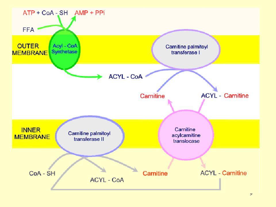 10 Yağ asidi sentezi için asetil-KoA'dan oluşan malonil-KoA, karnitin palmitoil transferaz I'i inhibe eder.