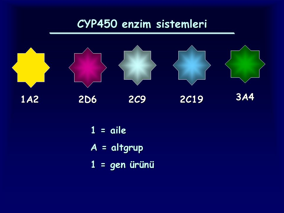CYP450 enzim sistemleri 1A22D62C92C19 3A4 1 = aile A = altgrup 1 = gen ürünü