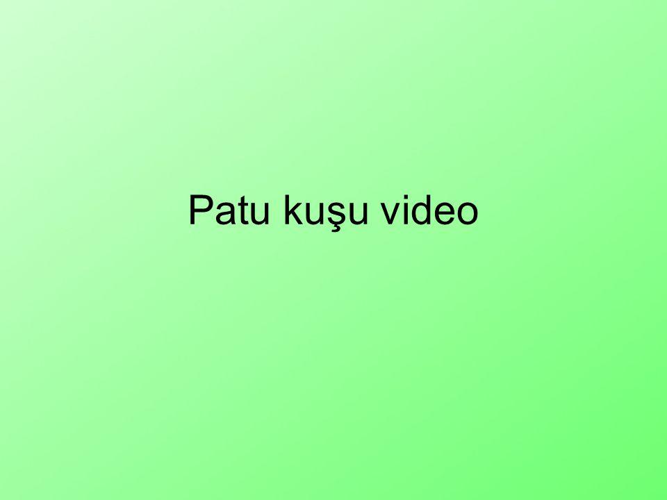 Patu kuşu video