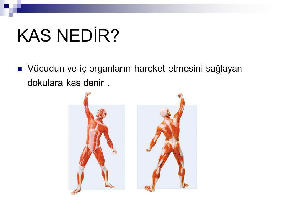 KAS NEDİR? Vücudun ve iç organların hareket etmesini sağlayan dokulara kas denir.