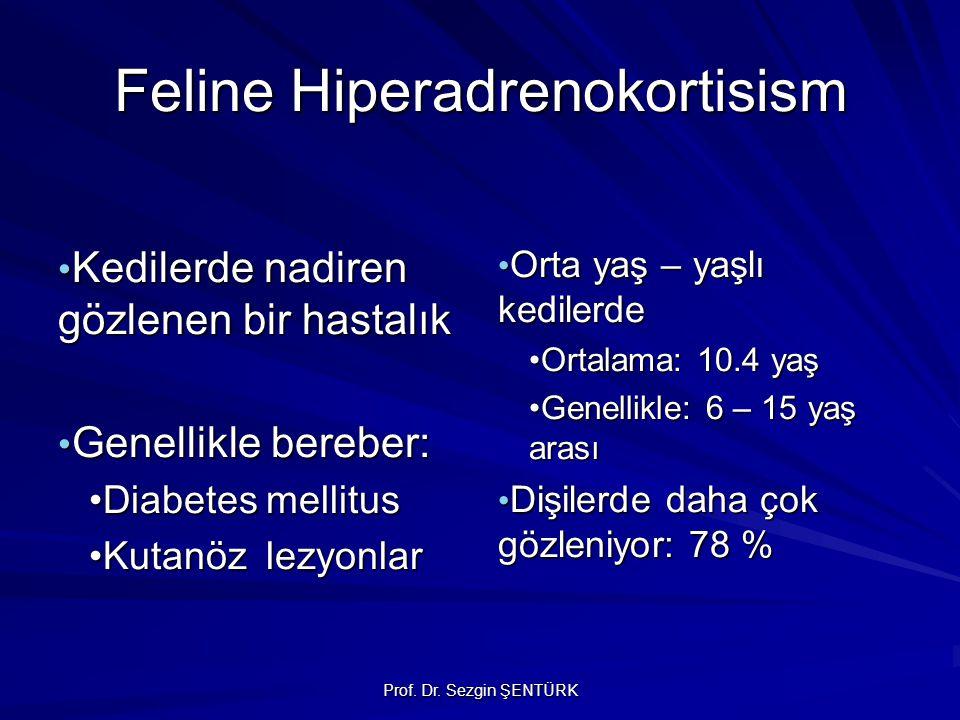 Prof. Dr. Sezgin ŞENTÜRK Feline Hiperadrenokortisism Kedilerde nadiren gözlenen bir hastalık Kedilerde nadiren gözlenen bir hastalık Genellikle berebe
