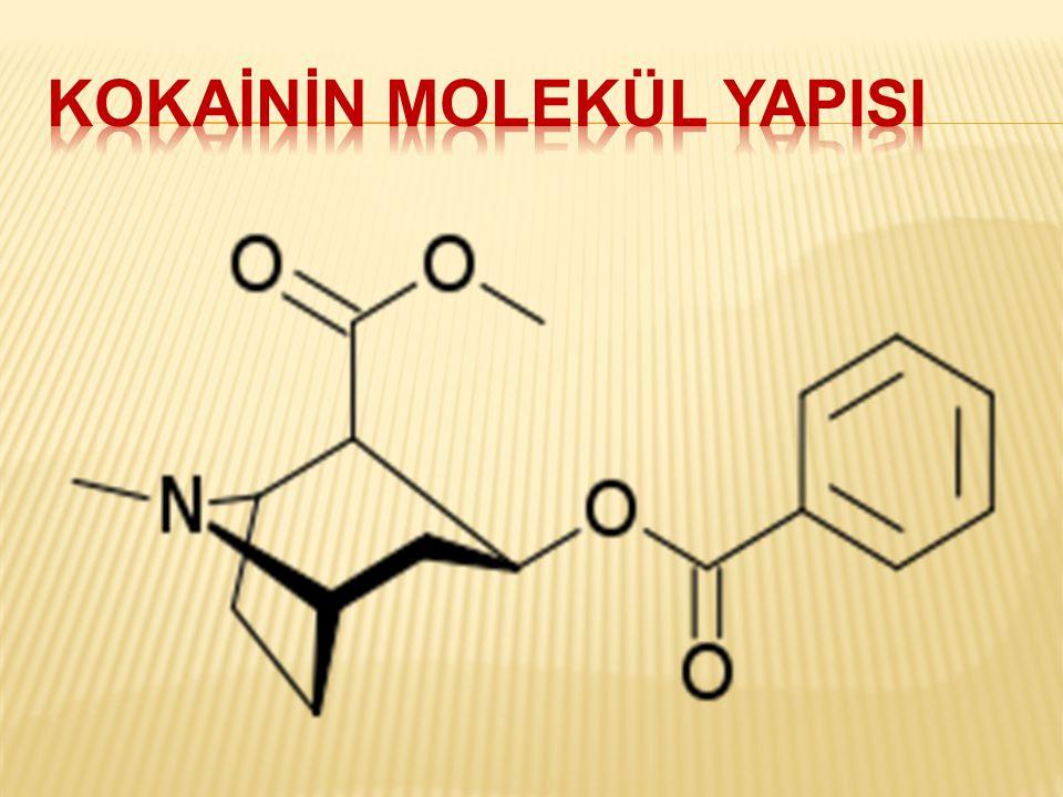  Güney Amerika'da yetişen Koka bitkisinden elde edilen bir alkaloiddir.
