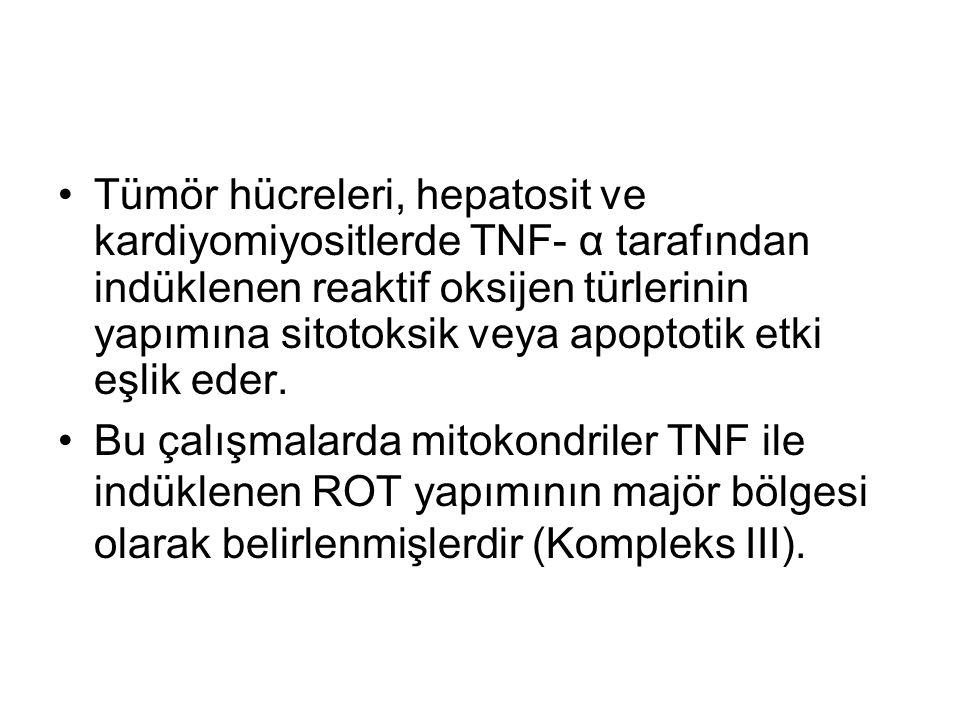 Tümör hücreleri, hepatosit ve kardiyomiyositlerde TNF- α tarafından indüklenen reaktif oksijen türlerinin yapımına sitotoksik veya apoptotik etki eşli