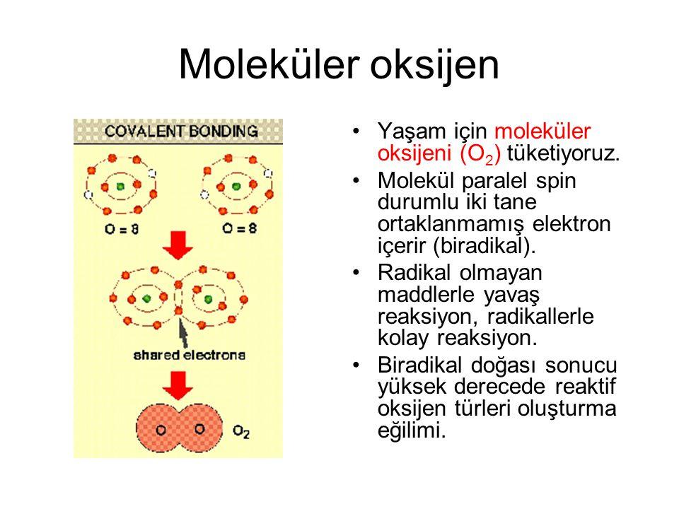 Reaktif oksijen türleri (ROT) Süperoksit radikali (O 2 - ), hidrojen peroksit (H 2 O 2 ) ve hidroksil radikalidir (OH - ).