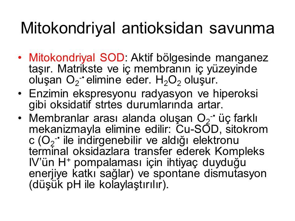 Mitokondriyal antioksidan savunma Mitokondriyal SOD: Aktif bölgesinde manganez taşır. Matrikste ve iç membranın iç yüzeyinde oluşan O 2 - elimine eder
