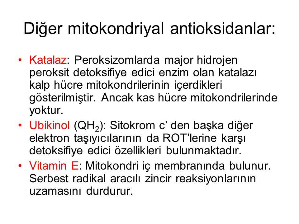 Diğer mitokondriyal antioksidanlar: Katalaz: Peroksizomlarda major hidrojen peroksit detoksifiye edici enzim olan katalazı kalp hücre mitokondrilerini