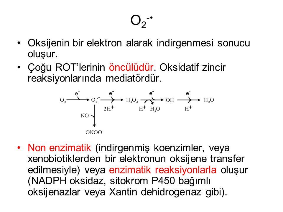 O 2 - Oksijenin bir elektron alarak indirgenmesi sonucu oluşur. Çoğu ROT'lerinin öncülüdür. Oksidatif zincir reaksiyonlarında mediatördür. Non enzimat