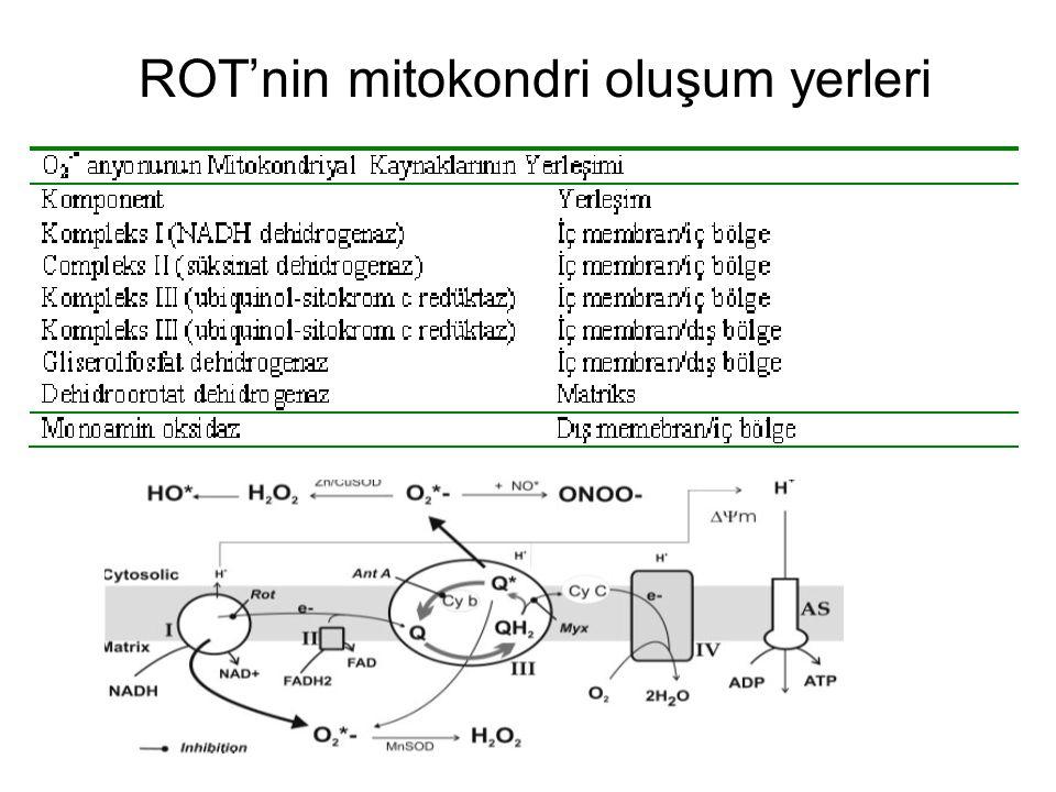 Tümör hücreleri, hepatosit ve kardiyomiyositlerde TNF- α tarafından indüklenen reaktif oksijen türlerinin yapımına sitotoksik veya apoptotik etki eşlik eder.