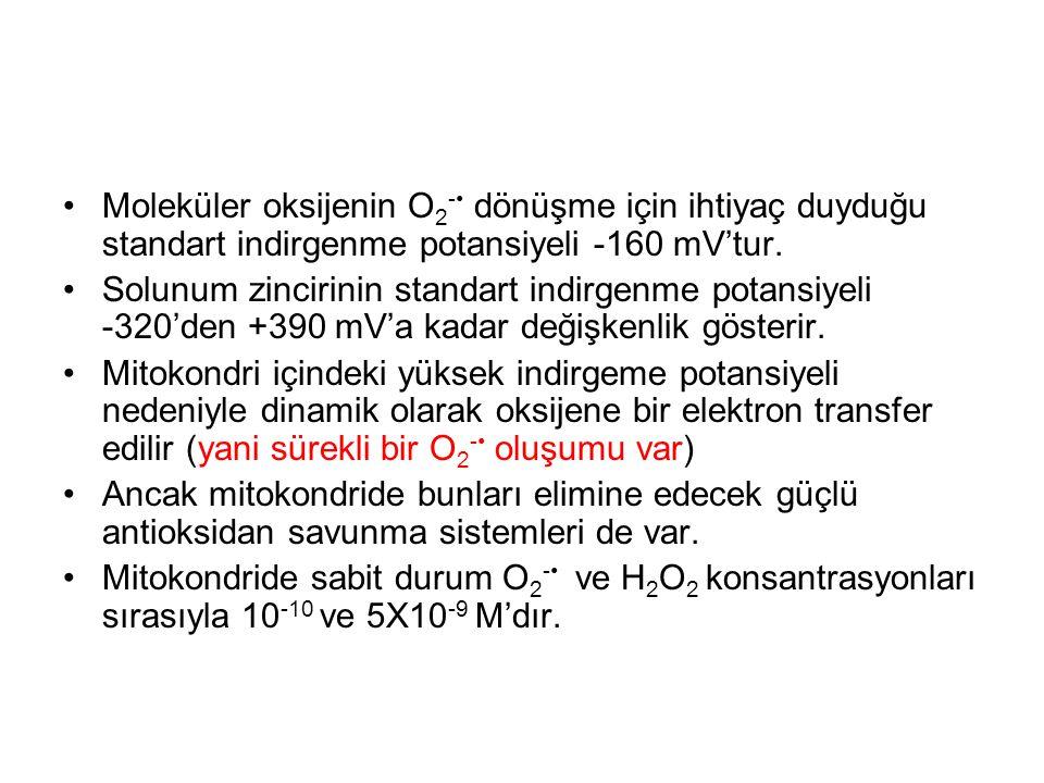 Moleküler oksijenin O 2 - dönüşme için ihtiyaç duyduğu standart indirgenme potansiyeli -160 mV'tur. Solunum zincirinin standart indirgenme potansiyeli