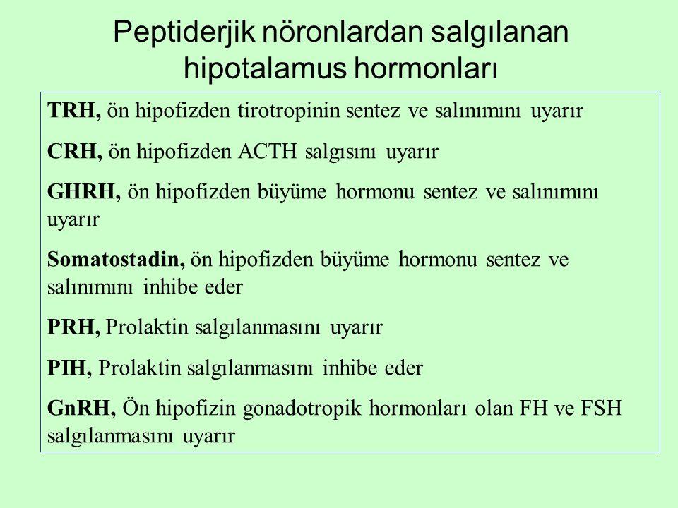 Peptiderjik nöronlardan salgılanan hipotalamus hormonları TRH, ön hipofizden tirotropinin sentez ve salınımını uyarır CRH, ön hipofizden ACTH salgısın