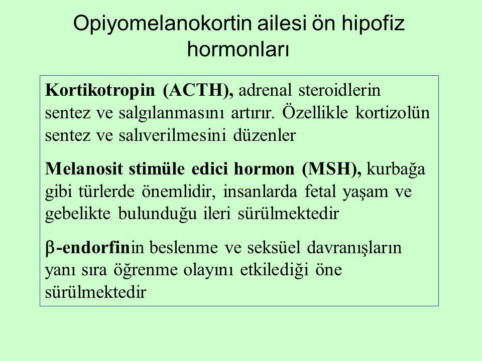 Opiyomelanokortin ailesi ön hipofiz hormonları Kortikotropin (ACTH), adrenal steroidlerin sentez ve salgılanmasını artırır. Özellikle kortizolün sente