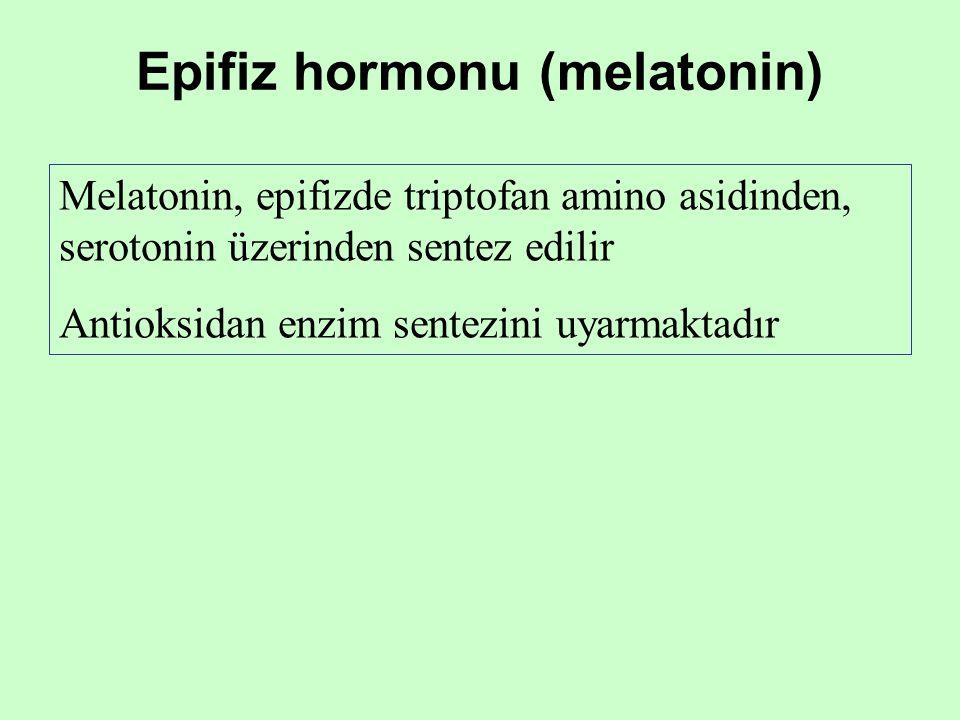Epifiz hormonu (melatonin) Melatonin, epifizde triptofan amino asidinden, serotonin üzerinden sentez edilir Antioksidan enzim sentezini uyarmaktadır