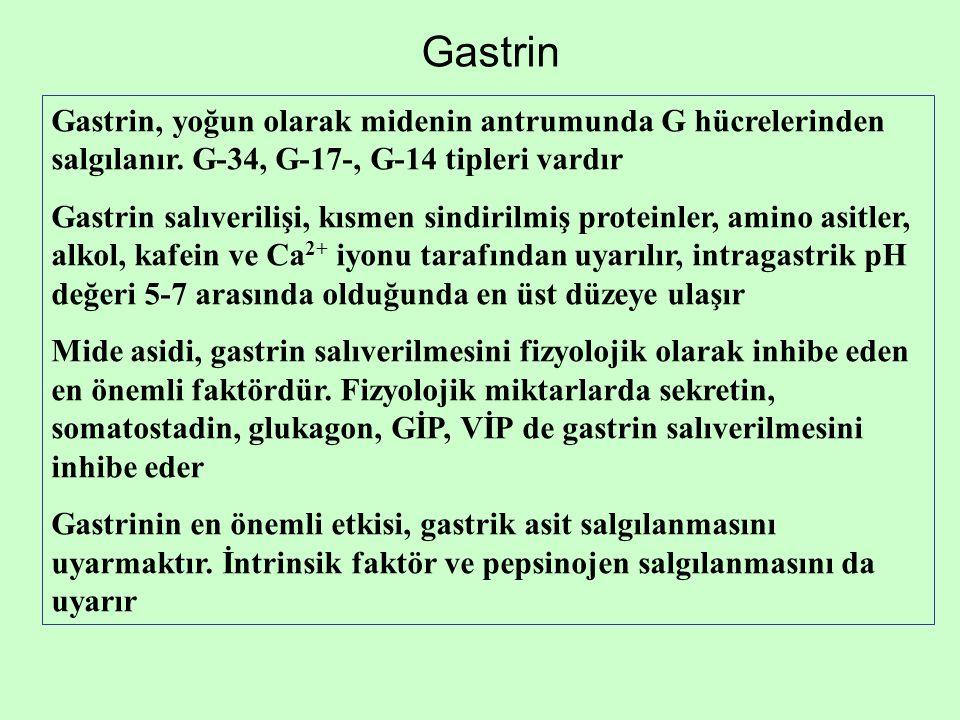 Gastrin Gastrin, yoğun olarak midenin antrumunda G hücrelerinden salgılanır. G-34, G-17-, G-14 tipleri vardır Gastrin salıverilişi, kısmen sindirilmiş