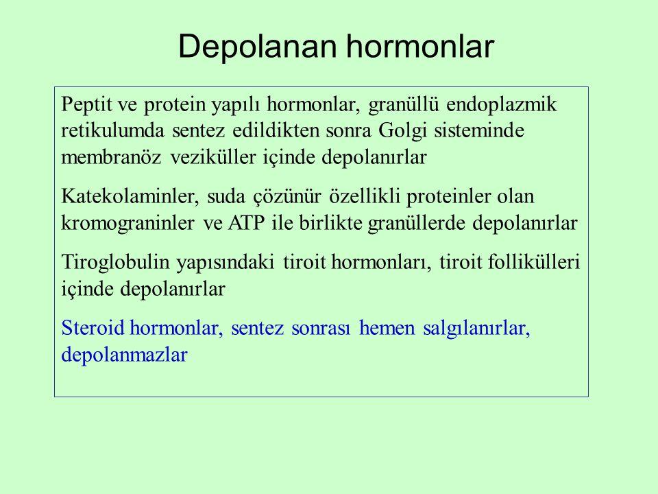 Depolanan hormonlar Peptit ve protein yapılı hormonlar, granüllü endoplazmik retikulumda sentez edildikten sonra Golgi sisteminde membranöz veziküller