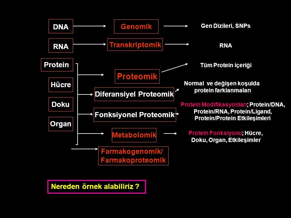 DNA RNA Protein Hücre Doku Organ Genomik Transkriptomik Proteomik Metabolomik Diferansiyel Proteomik Fonksiyonel Proteomik Gen Dizileri, SNPs RNA Tüm Protein içeriği Normal ve değişen koşulda protein farklanmaları Protein Modifikasyonları; Protein/DNA, Protein/RNA, Protein/Ligand, Protein/Protein Etkileşimleri Protein Fonksiyonu; Hücre, Doku, Organ, Etkileşimler Farmakogenomik/ Farmakoproteomik Nereden örnek alabiliriz ?