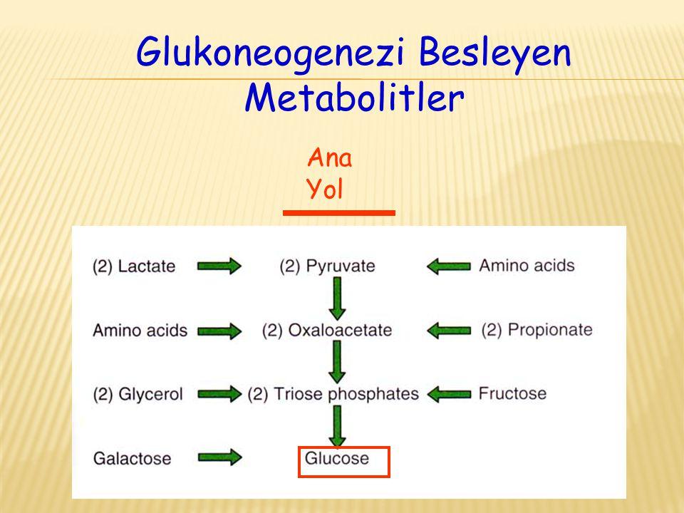 Glukoneogenezi Besleyen Metabolitler Ana Yol