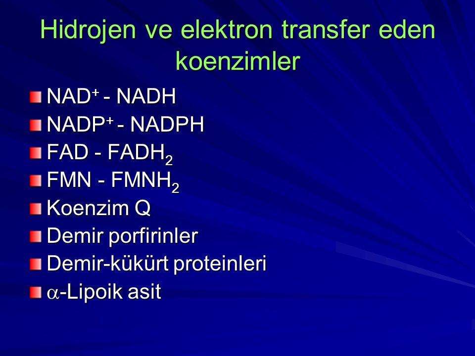 Hidrojen ve elektron transfer eden koenzimler NAD + - NADH NADP + - NADPH FAD - FADH 2 FMN - FMNH 2 Koenzim Q Demir porfirinler Demir-kükürt proteinle