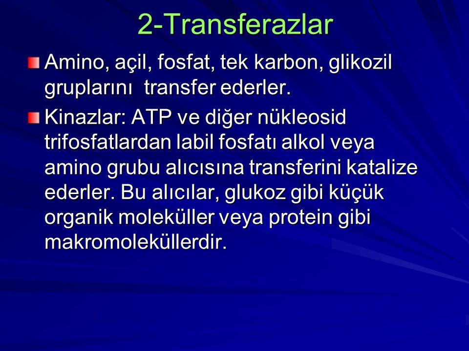 2-Transferazlar Amino, açil, fosfat, tek karbon, glikozil gruplarını transfer ederler. Kinazlar: ATP ve diğer nükleosid trifosfatlardan labil fosfatı