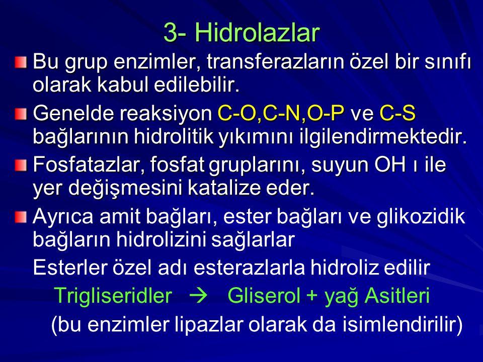 3- Hidrolazlar Bu grup enzimler, transferazların özel bir sınıfı olarak kabul edilebilir. Genelde reaksiyon C-O,C-N,O-P ve C-S bağlarının hidrolitik y