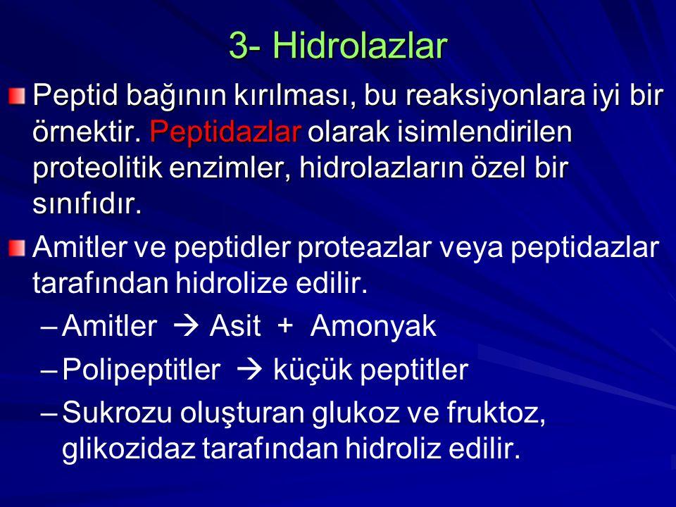 3- Hidrolazlar Peptid bağının kırılması, bu reaksiyonlara iyi bir örnektir. Peptidazlar olarak isimlendirilen proteolitik enzimler, hidrolazların özel