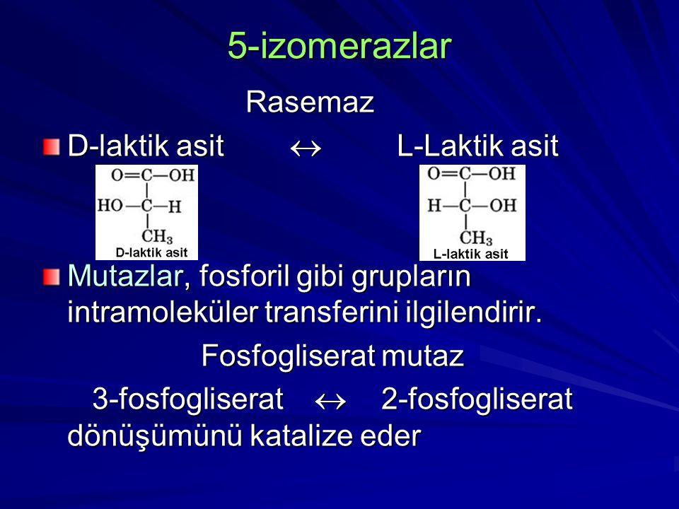 5-izomerazlar Rasemaz D-laktik asit  L-Laktik asit Mutazlar, fosforil gibi grupların intramoleküler transferini ilgilendirir. Fosfogliserat mutaz Fos