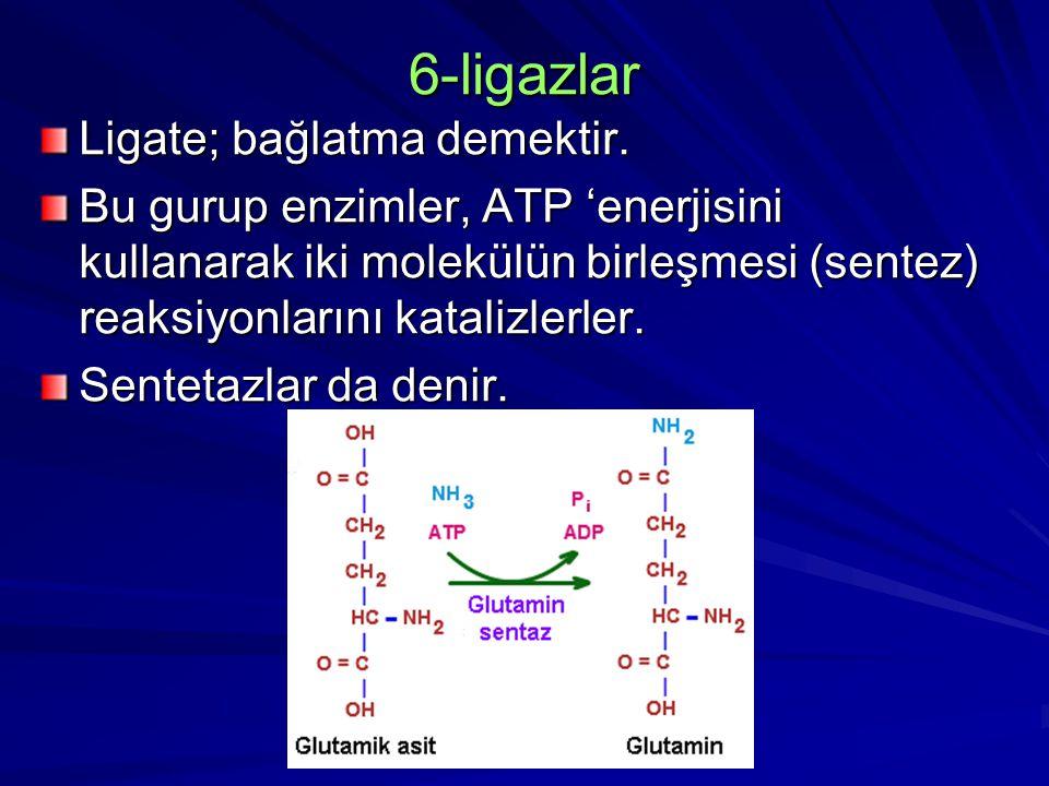 6-ligazlar Ligate; bağlatma demektir. Bu gurup enzimler, ATP 'enerjisini kullanarak iki molekülün birleşmesi (sentez) reaksiyonlarını katalizlerler. S