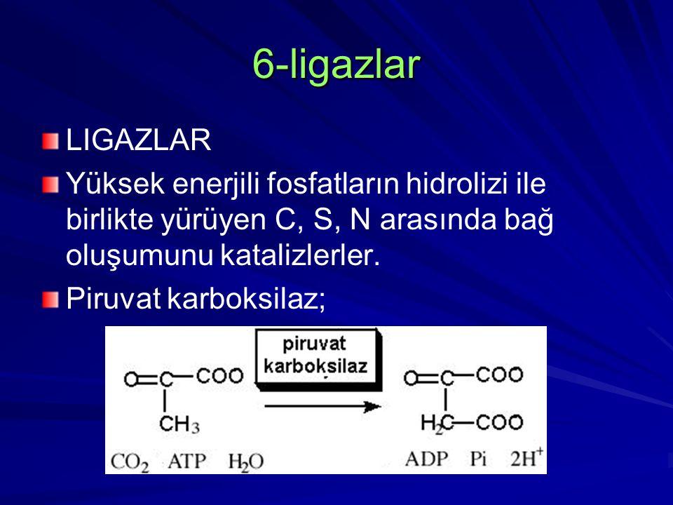 6-ligazlar LIGAZLAR Yüksek enerjili fosfatların hidrolizi ile birlikte yürüyen C, S, N arasında bağ oluşumunu katalizlerler. Piruvat karboksilaz;