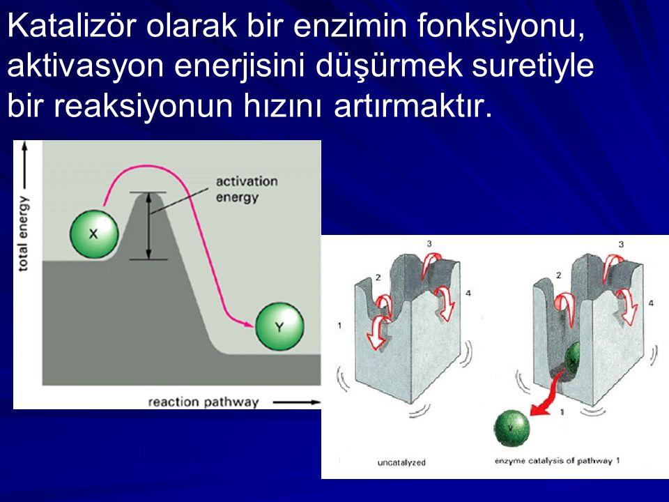 Katalizör olarak bir enzimin fonksiyonu, aktivasyon enerjisini düşürmek suretiyle bir reaksiyonun hızını artırmaktır.