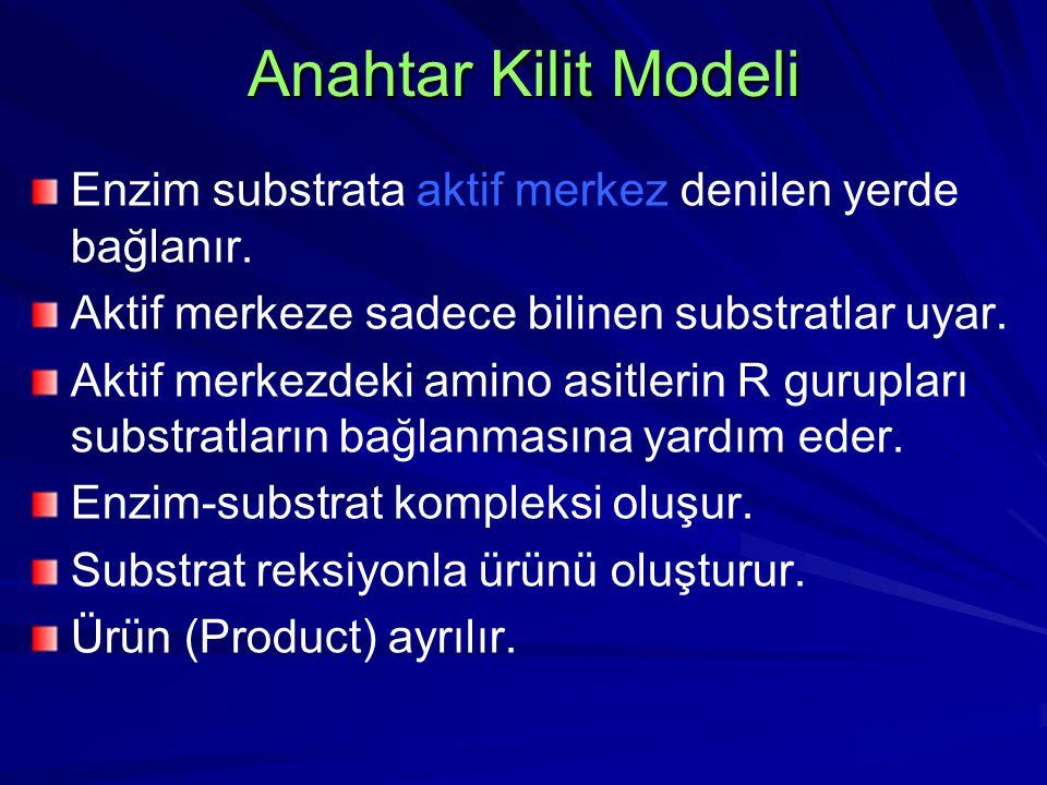Anahtar Kilit Modeli Enzim substrata aktif merkez denilen yerde bağlanır. Aktif merkeze sadece bilinen substratlar uyar. Aktif merkezdeki amino asitle