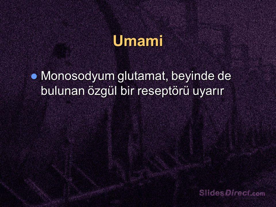 Umami Monosodyum glutamat, beyinde de bulunan özgül bir reseptörü uyarır Monosodyum glutamat, beyinde de bulunan özgül bir reseptörü uyarır