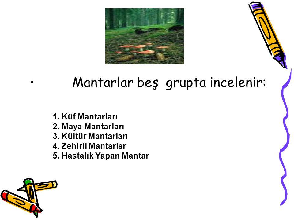 Mantarlar beş grupta incelenir: 1. Küf Mantarları 2. Maya Mantarları 3. Kültür Mantarları 4. Zehirli Mantarlar 5. Hastalık Yapan Mantar