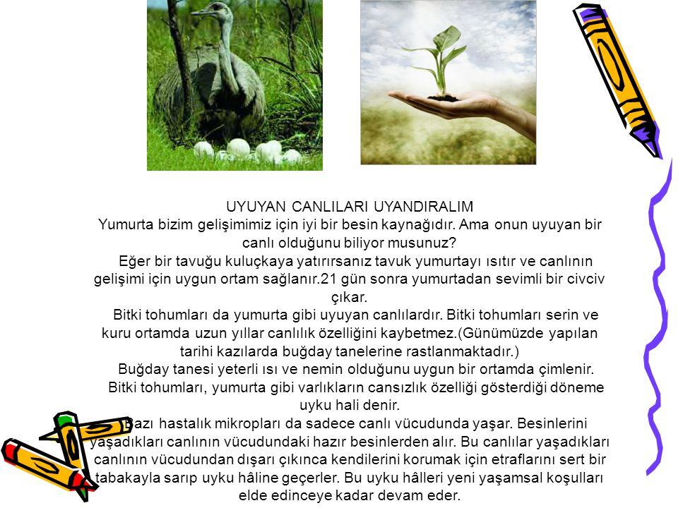 Canlılar önce bitkiler ve hayvanlar olmak üzere iki gruba ayrılmıştır.