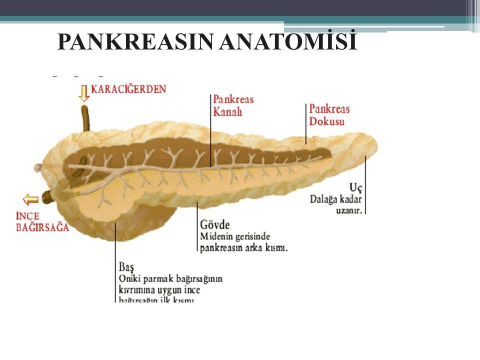 PANKREASIN ANATOMİSİ