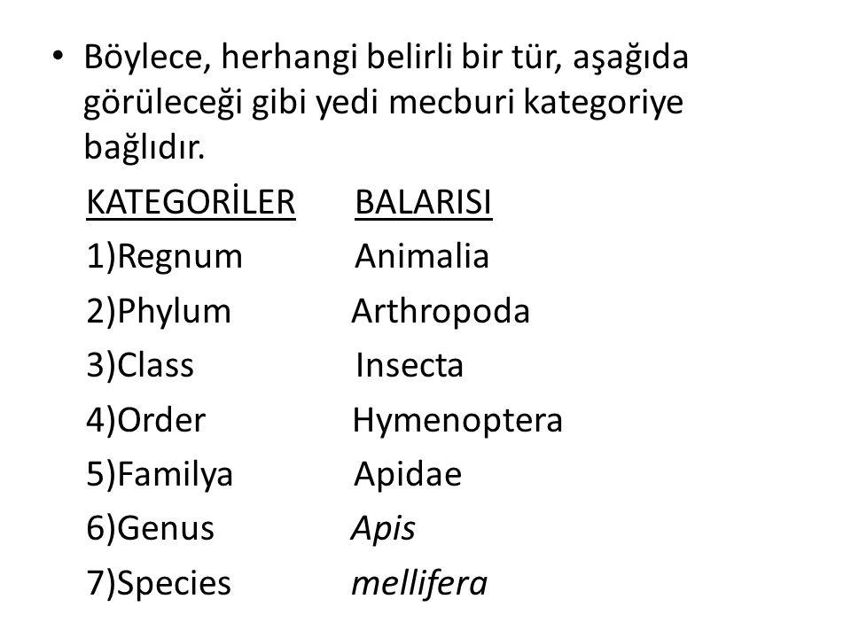 Böylece, herhangi belirli bir tür, aşağıda görüleceği gibi yedi mecburi kategoriye bağlıdır. KATEGORİLER BALARISI 1)Regnum Animalia 2)Phylum Arthropod