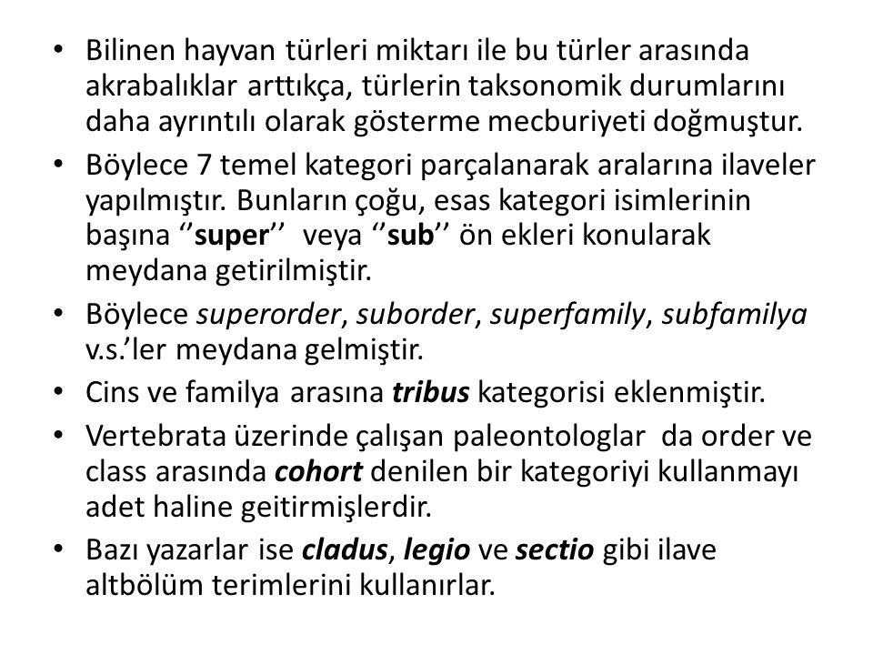 Genel olarak kabul edilen kategoriler: – Regnum= Kingdom – Phylum – Subphylum – Superclass – Class – Subclass – Cohort – Superorder – Superfamily(-oidea) – Familya(-idea) – Subfamily(-inae) – Tribus(-ini) – Genus – Subgenus – Species – Subspecies Parantez içinde gösterilenler tribus, subfamily, family ve superfamily isimlerini gösteren standart kelime ekleridir.