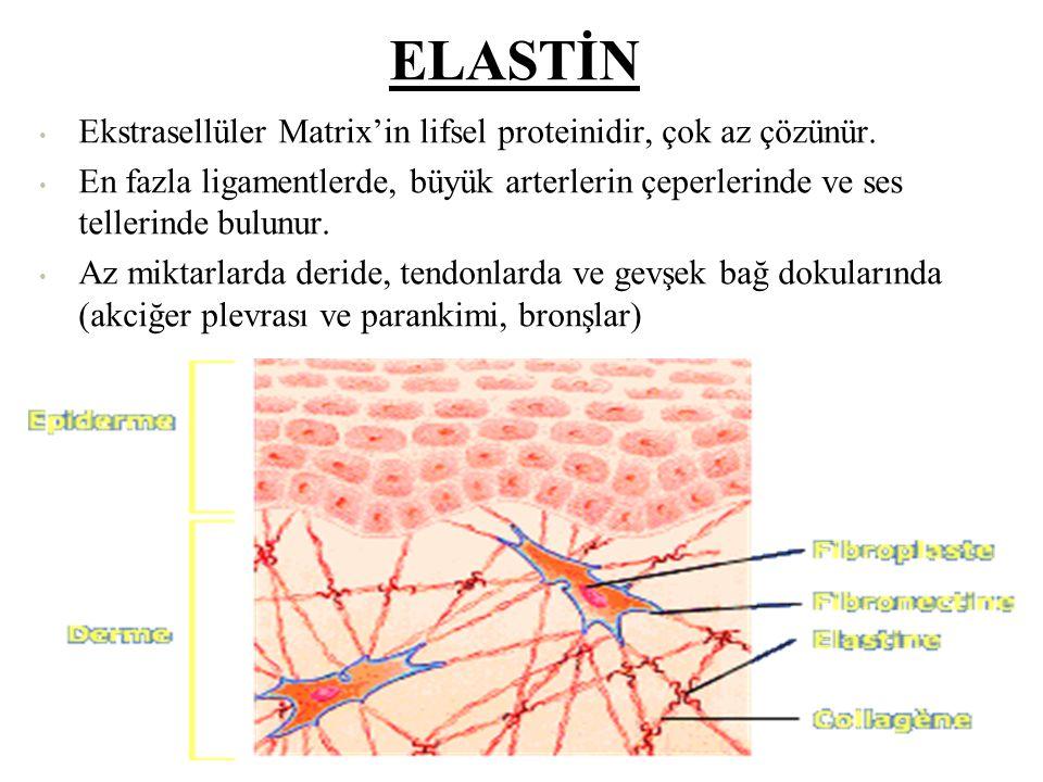 Temel fonksiyonu;  Vücut organ ve dokularını şekillendirmek ve yapısal güç sağlamaktır.  Bir ortak eksen etrafında birbirine sarılı 3 polipeptid zin