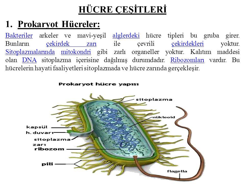 HÜCRE ÇEŞİTLERİ 1.Prokaryot Hücreler: BakterilerBakteriler arkeler ve mavi-yeşil alglerdeki hücre tipleri bu gruba girer.