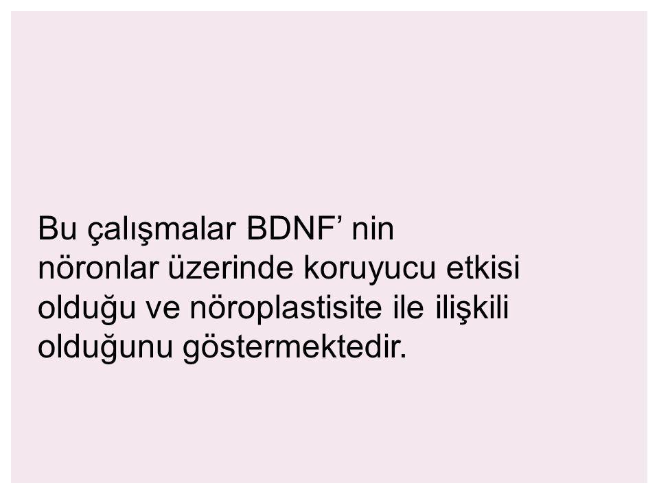 Bu çalışmalar BDNF' nin nöronlar üzerinde koruyucu etkisi olduğu ve nöroplastisite ile ilişkili olduğunu göstermektedir.