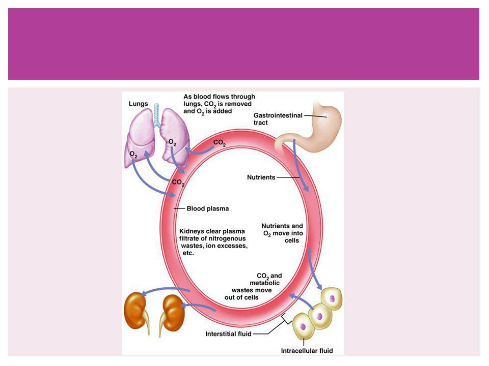 Hücre yüzeyinde bulunan hücre adezyon molekülleri (CAM), ilgili reseptörlerine bağlandıktan sonra hücre içinde bulunan kinazlar, fosfatazlar ve proteazlar gibi sinyal moleküllerini aktive ederler.