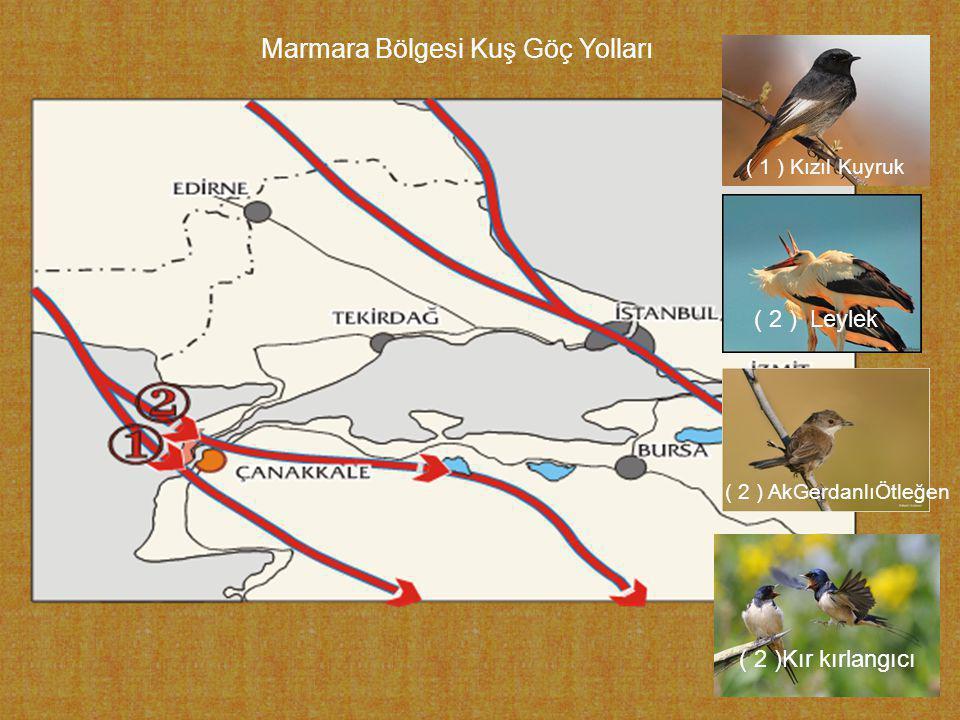 Marmara Bölgesi Kuş Göç Yolları ( 1 ) Kızıl Kuyruk ( 2 ) Leylek ( 2 ) AkGerdanlıÖtleğen ( 2 )Kır kırlangıcı