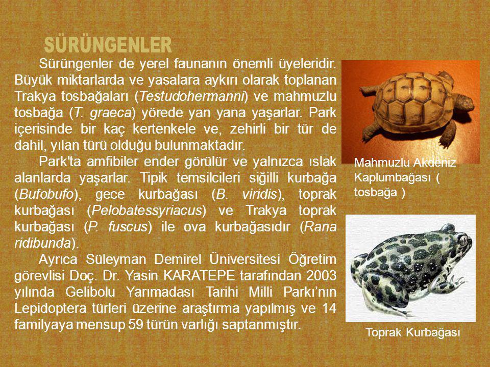 Sürüngenler de yerel faunanın önemli üyeleridir.