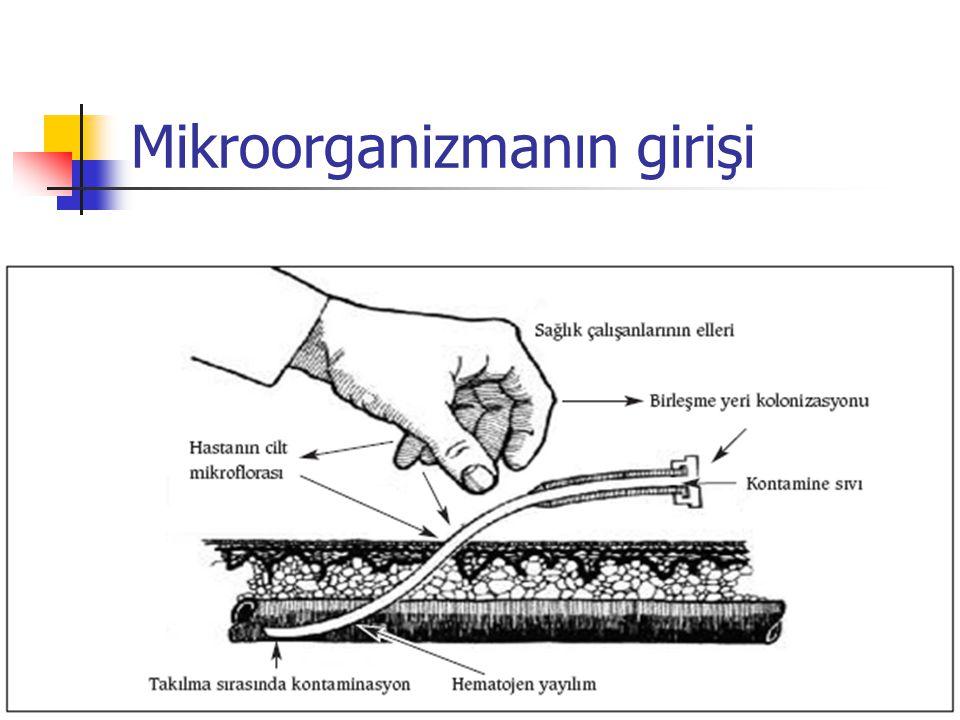 Mikroorganizmanın girişi