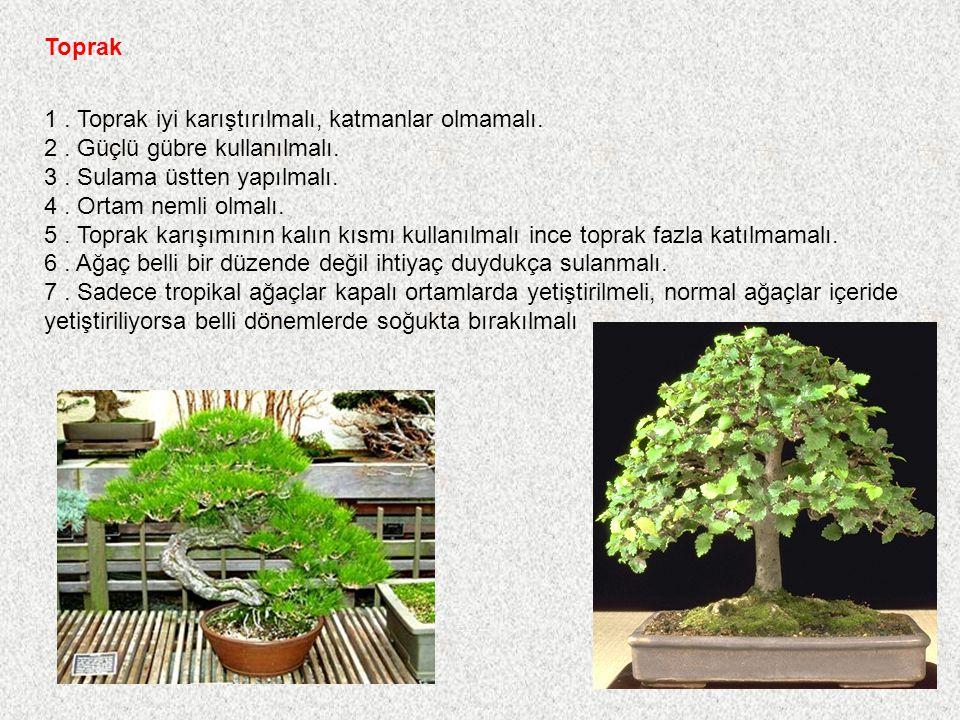 Saksı 1. Ağaç saksının orta noktasının gerisinde ve bir miktar sağda yada solda olmalı. 2. Renkli saksılar çiçek açan ve meyve veren ağaçlarda kullanı