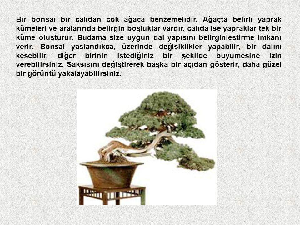 Bonsai nedir? Bonsai; ağaçları özel saksılarda, özel tekniklerle budayarak, şekillendirerek ve bodurlaştırarak büyüterek estetik bir görüntü kazandırm